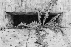 Onkruid (Bolsward), 2021, 25,4x25,4cm. fineliner op papier
