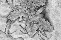 Onkruid (Haren), 2021, 25,4x25,4cm., fineliner op papier