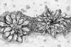 Onkruid (Maasbracht) 2021, 25,4x25,4cm., fineliner op papier